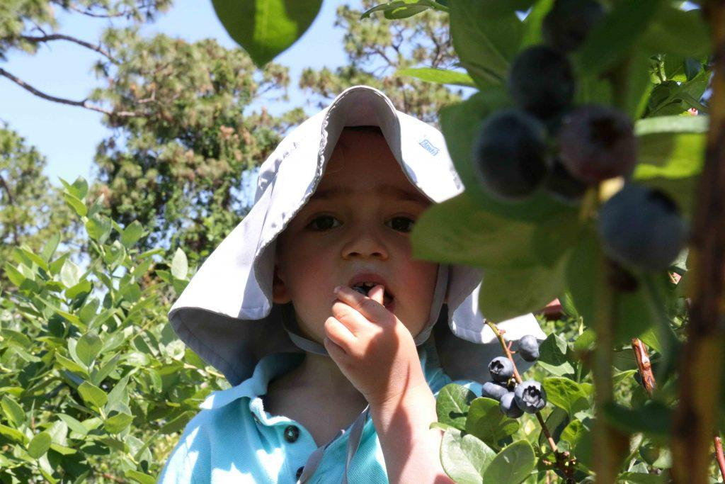 Toddler-Picking-Blueberries