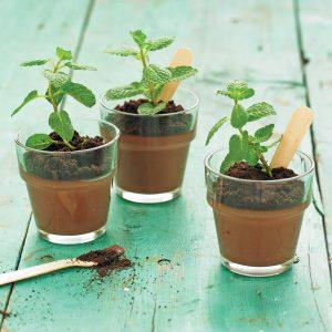 Potted Chocolate Mint Puddings